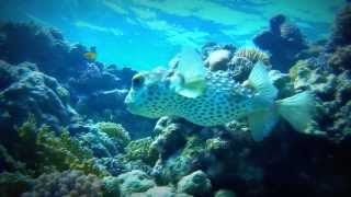 Download Abu Dabbab (El Malikia - Sol-Y-Mar) Marsa Alam - Egypt 2013 - PART5 - BEST OFF Video