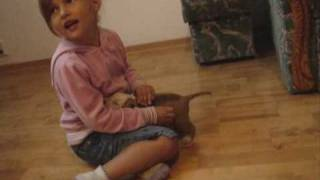 Download Piesek - niespodzianka - Amstaff - szczeniak Video