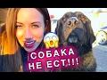 Download ЧТО-ТО ПОШЛО НЕ ТАК !!! БЕЗДОМНАЯ СОБАКА НЕ ЕСТ И ВЫПОЛНЯЕТ КОМАНДЫ | Elli Di Pets Video