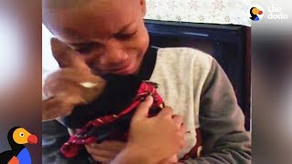 Download Boy Has BEST Reaction to Dog Adoption | The Dodo Video