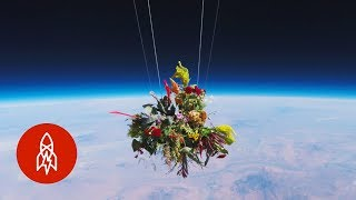 Download Launching Flowers Into Outer Space Video