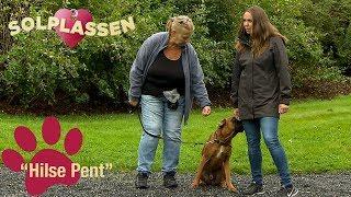 Download Hundetips: Lær hunden å hilse pent på andre mennesker | Solplassen Video
