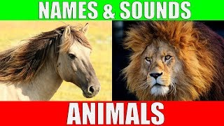 Download ANIMAL NAMES AND SOUNDS for Kids Video Compilation - Learn Animal Names for Children & Toddlers Video