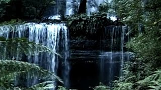 Download Rainforest Impressions: Tranquil World - Relaxation with Music & Nature (Trailer) Video