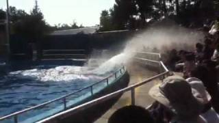 Download Espectáculo de ballena en six flags Video