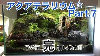 Download 日本のアクアテラリウム水槽立上げ Part.7(最終回) Video
