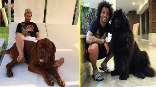 Download Futbolistas Famosos y Sus Perros ● Famous Footballers And Their Dogs Video