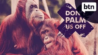 Download Palm Oil Ban - Behind the News Video