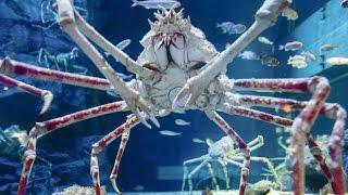 Download Top 10 Scariest Giant Creatures Video