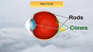 Download Medical Facts with All the IFR Test Questions on Them (PPV) Video