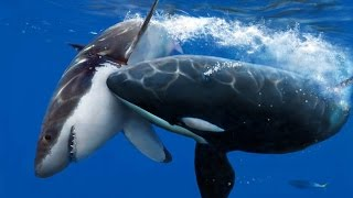 Download 11 Scariest Ocean Predators Video