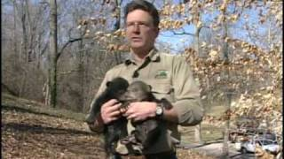 Download Living With Black Bears in Virginia Video