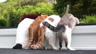 Download 軽トラの4匹のねこ160729 Video