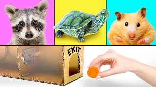 Download 3 Hilarious Pets And 3 Smart Crafts for Kids Video