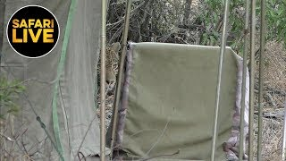 Download safariLIVE - Sunrise Safari - August 08, 2019 Video