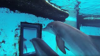 Download Just how smart are dolphins? - Inside the Animal Mind - BBC Video