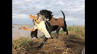 Download SPECKLEBELLY HUNTING Video