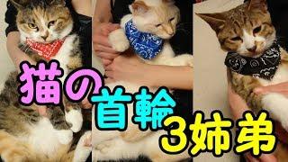 Download 猫が首輪を付けても嫌がらない方法とは?!ーその後の、かわいい子猫が突然お家にやってきた-その時、先住猫達は超特別編 Video