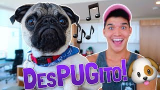 Download PUPPY'S NEW SONG!! (DesPUGito) Video