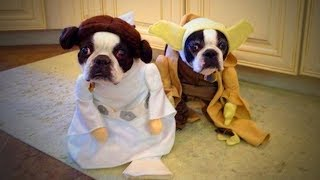 Download Cute Pets 🐱🐶 Lovely Cats And Dogs Wearing Costumes (Part 2) [Funny Pets] Video