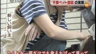 Download ペットの処刑場「動物愛護センター」ドリームボックス Dream Box~の実態 Video