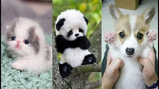 Download Cute baby animals Videos Compilation cute moment of the animals - Soo Cute! #7 Video