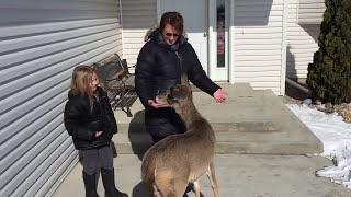 Download Friendly deer comes back Video