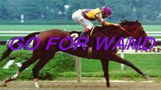 Download The Best Racehorses of the World! Video