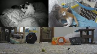 Download Angel Gives Birth to Kittens - Live! Video