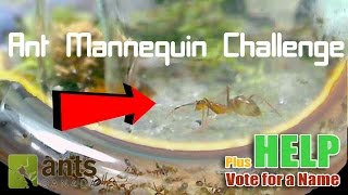 Download Ant Mannequin Challenge + Name Voting | Entering the Nest: Yellow Crazy Ants Video
