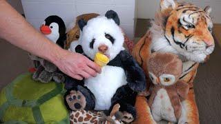 Download Panda Eats Ice Cream Cone: Funny Dog Maymo Video