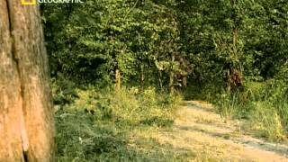 Download National Geographic - Ape Man : Search for the First Human (2005) Video