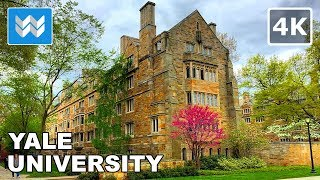 Download Walking around Yale University in New Haven, Connecticut 【4K】 Video