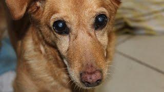 Download Zuhause für Hunde und Katzen gesucht - Tierheim Wau-Mau-Insel Video