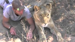 Download Man is reunited with lion he raised when it was a cub Video