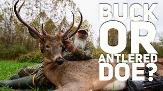 Download Is It a Buck or Doe With Antlers? -The Caitlyn Buck S8 #60 Video