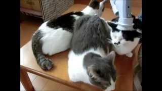 Download 【cat】猫を掃除機で吸ってみた Video