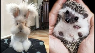 Download Cute baby animals Videos ″Cat catch Jerry″ Cutest Animals #77 Video