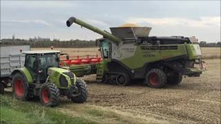 Download CLAAS LEXION 780 Video