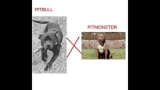 Download Pitbull é vira lata, PitMonster é puro! SACANAGEM Video
