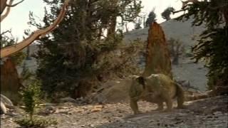 Download documentales bbc caminando con monstruos vida antes de los dinosaurios Video
