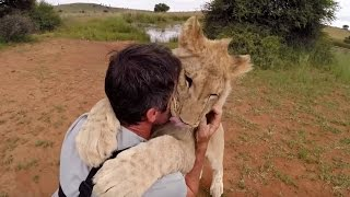 Download The Lion Cubs Are Growing Up! | The Lion Whisperer Video