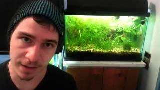 Download 2. Breeding Fancy Guppies (tank setup) Video
