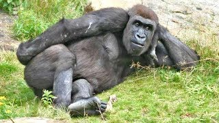 Download Top 10 Funny Monkeys Behaving Like Humans - Try Not To Laugh Challenge || Monkey Videos Video