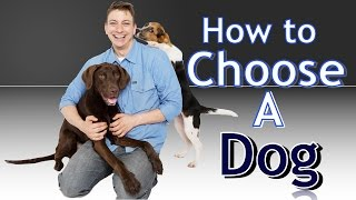 Download Training 4 Different Dogs: How to choose the BEST Dog for You! Video