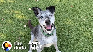 Download Watch This 19-Year-Old Puppy Pick His Very Own Toy At The Pet Store | The Dodo Adopt Me! Video