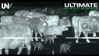 Download Thermal Predator Hunting | 45 Coyotes Down with the IR Hunter MKIII 35mm Video