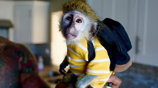 Download MY BABY MONKEY'S Back to School Morning Routine! Video