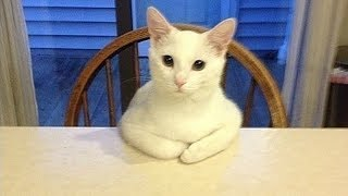 Download 20 Strange Cat Behaviors Explained! Video