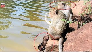 Download OMG Why Big monkey Push baby into water? Baby scaring/ MUM-baby Crying Youlike Monkey 1497 Video